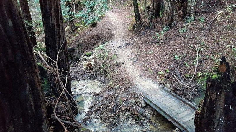 Trail through redwoods on lower Eucalyptus Loop.