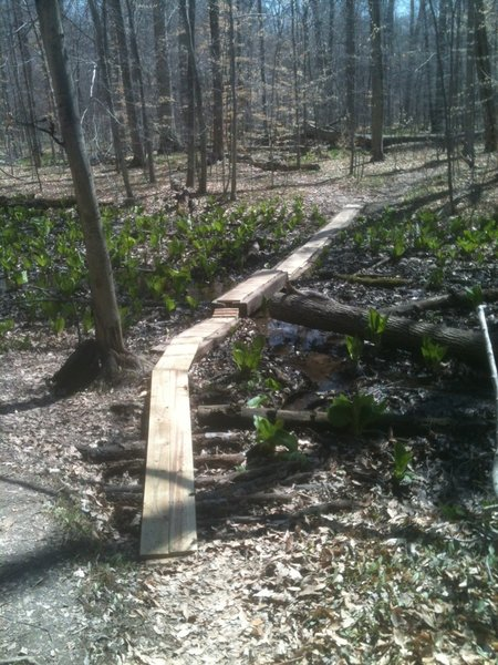 Poland Woods Big Willow Trail swamp boards.