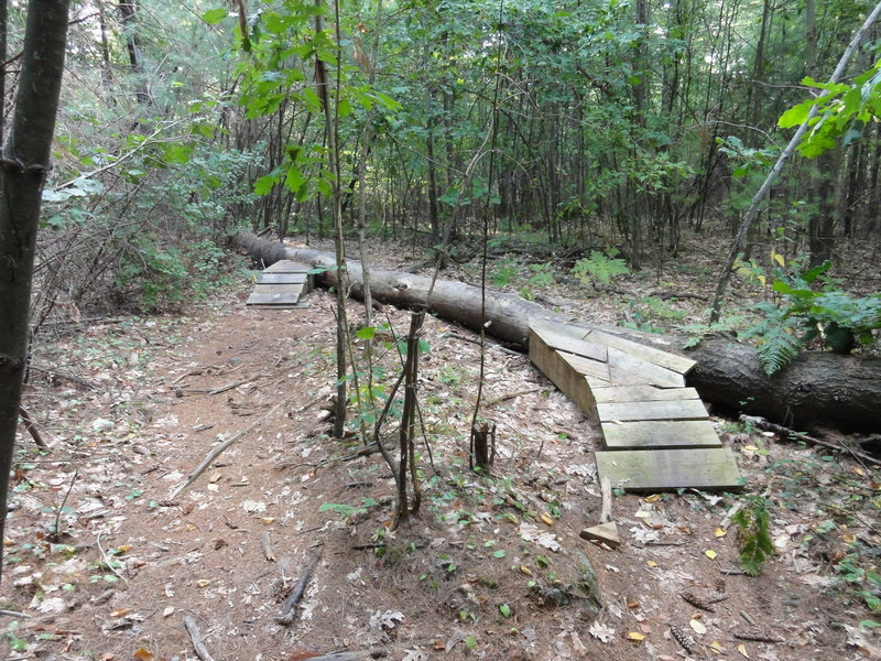 The Sallie Log is one of many features on the Twisted Sister Trail.