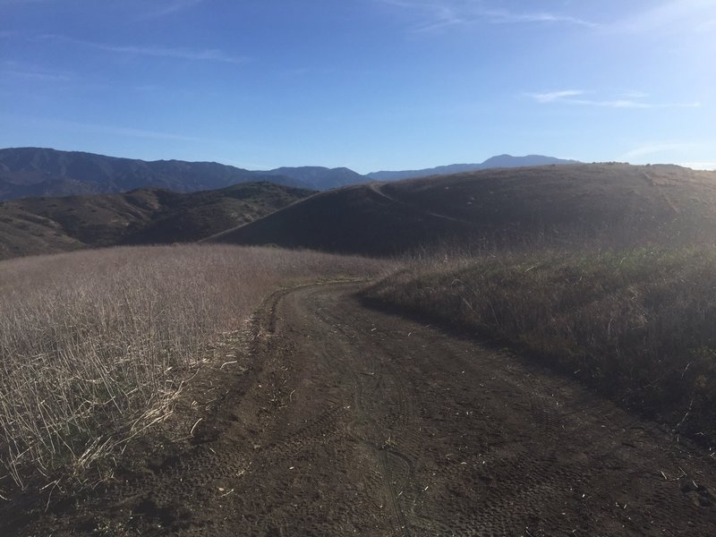 West Loma traverses an open expanse of hills and meadows on Loma Ridge.