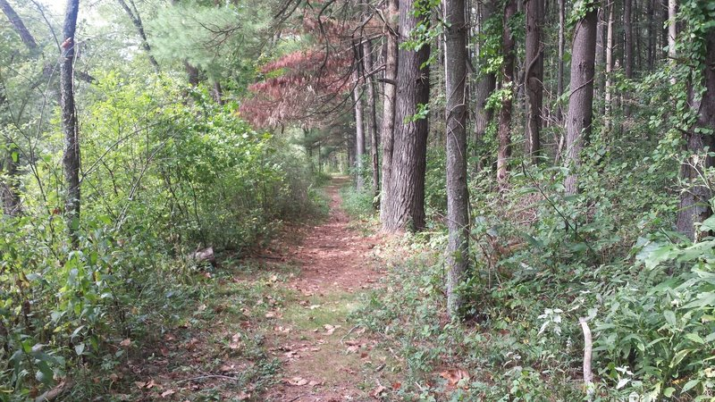 Another section on the lower side of Dogwood Trail along the creek.
