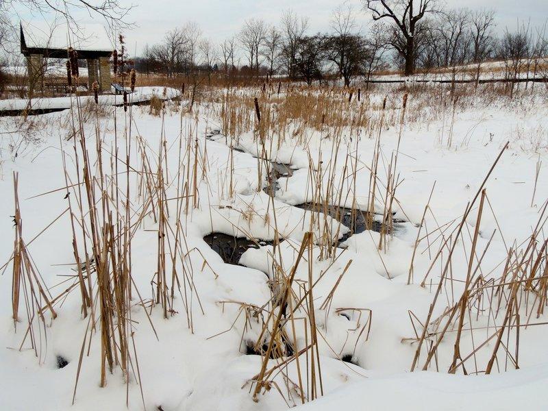Wetland in the winter near Creek Overlook.