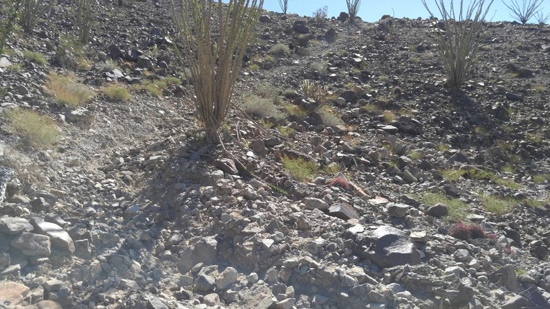 Badly eroded with cactus and ocotillo overgrowing the trail. Good speed control helps survive the descent.