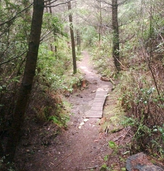 A fairly technical section in one of the fun downhill trails in the Port Gamble complex.