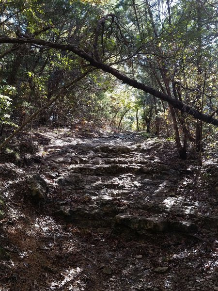 One of the many rocky drops you'll encounter on the Coyote Run Trail.