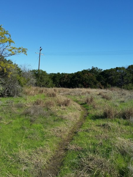 Smooth singletrack through a meadow near the beginning of the Fossil Ridge Trail.