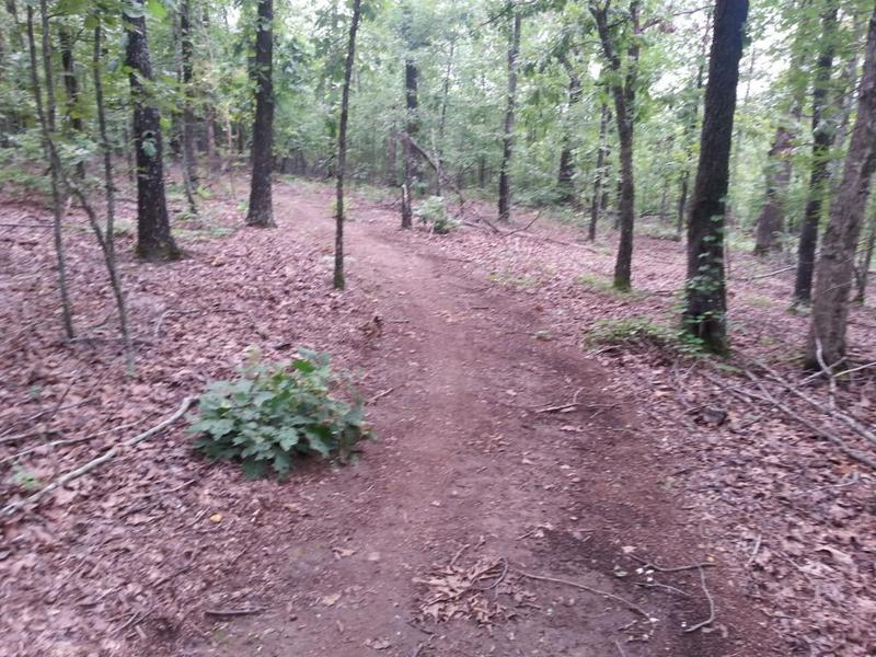 Pretty mild trail section at the top of the South Loop.