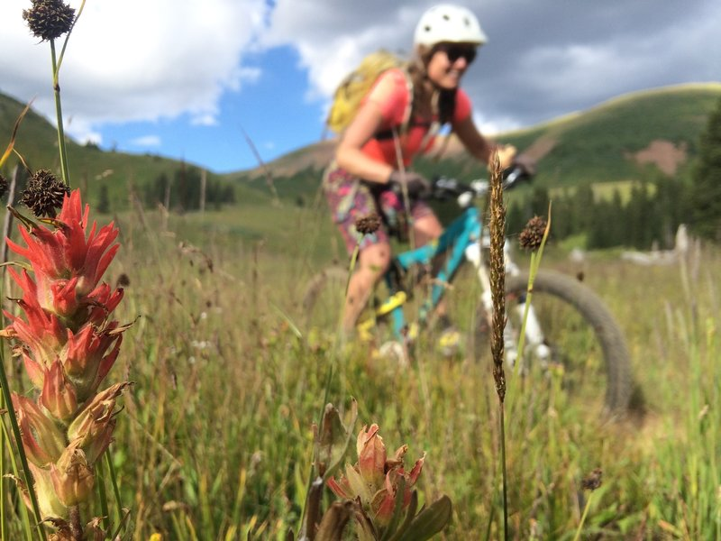 Indian Paintbrush and a stoked rider. Starr Pass Trail #400.