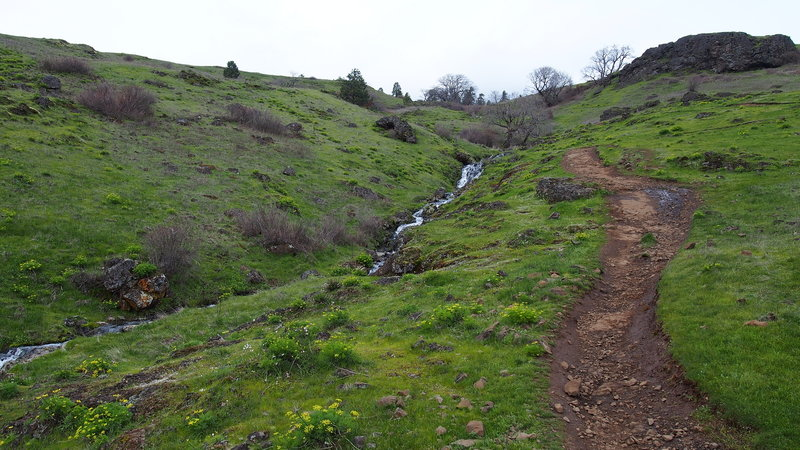 Little section of trail next to a stream.