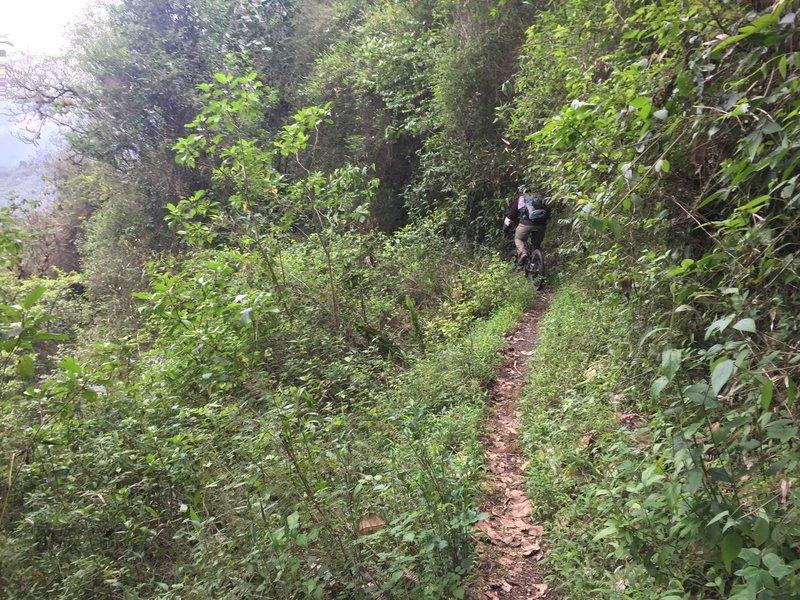 Singletrack built into the jungle cliff.