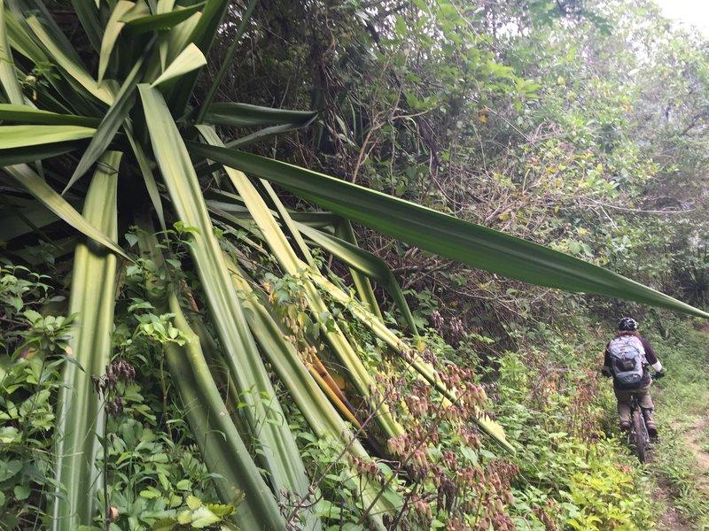 Jungle Brrraaaappp!