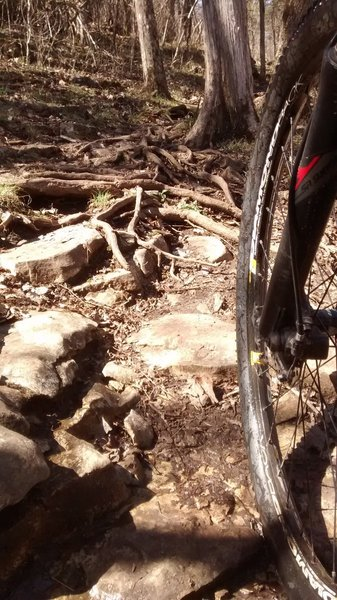 Rocks and roots on the Beacham Trail.