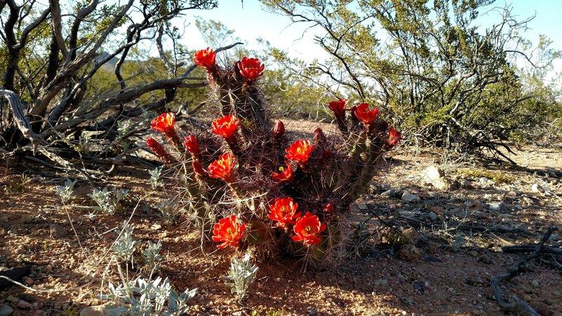 Desert spring bloom.