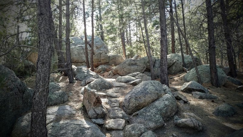 Rocky section of Cougar's Shadow trail.