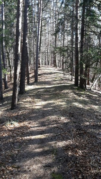 Trail near the top of the hill.
