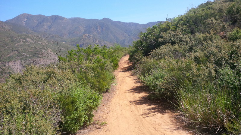 View of Santiago Truck Trail (looking east) with Santiago Peak (trademark antennas) in the background.