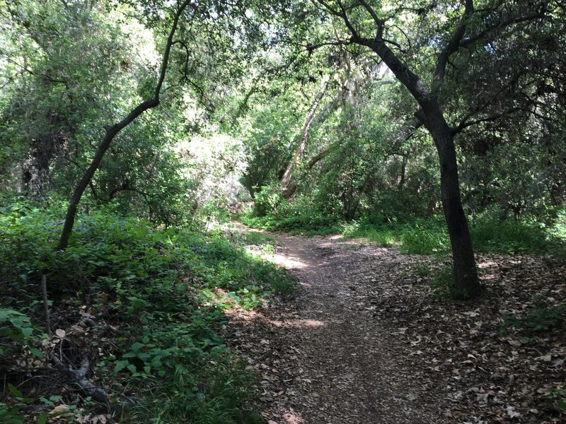 Meandering trail through the forest.