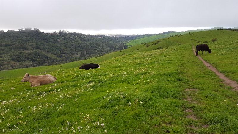 Conlon Trail overlooking Wildcat Canyon.