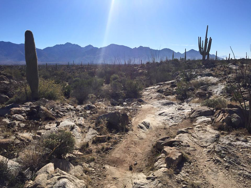 One of the rockier sections of the trail so don't stare at the gorgeous views too long.