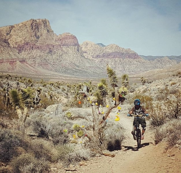 Wheelie by the Duckie Trail