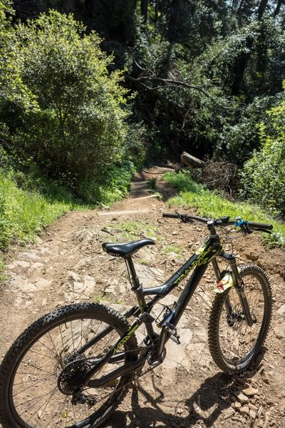 Joaquin Miller - Chaparral Trail.