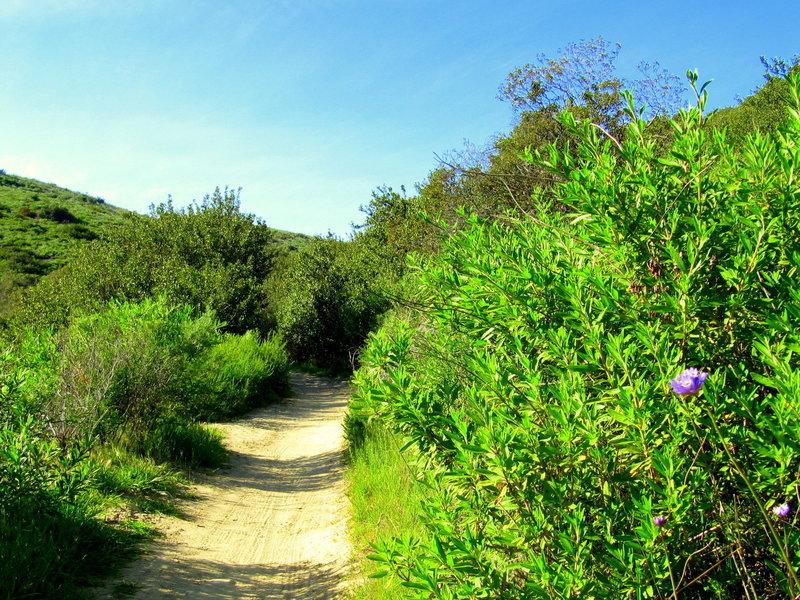 Lynx Trail.