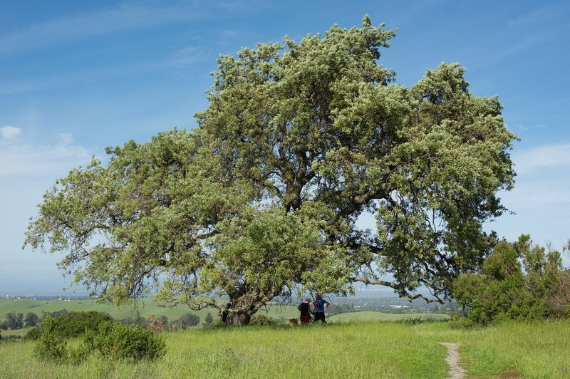 Two mountain bike riders take a break in the shade of the tree as they enjoy the view.