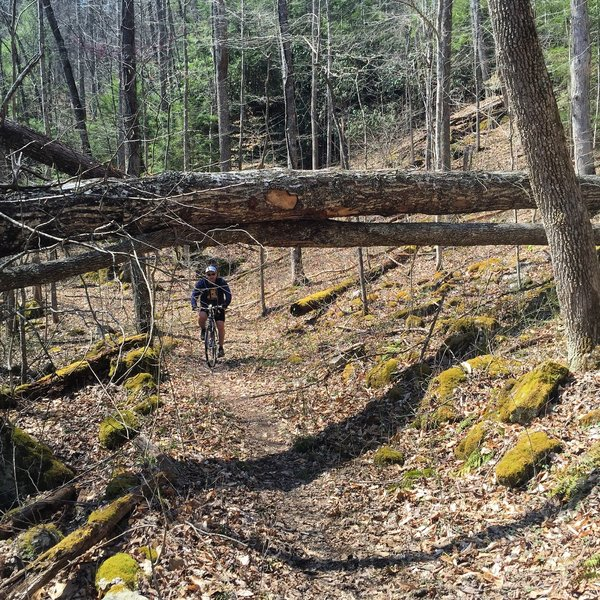Had to go over and under some trees. Trail isn't bad but could use some improvement.