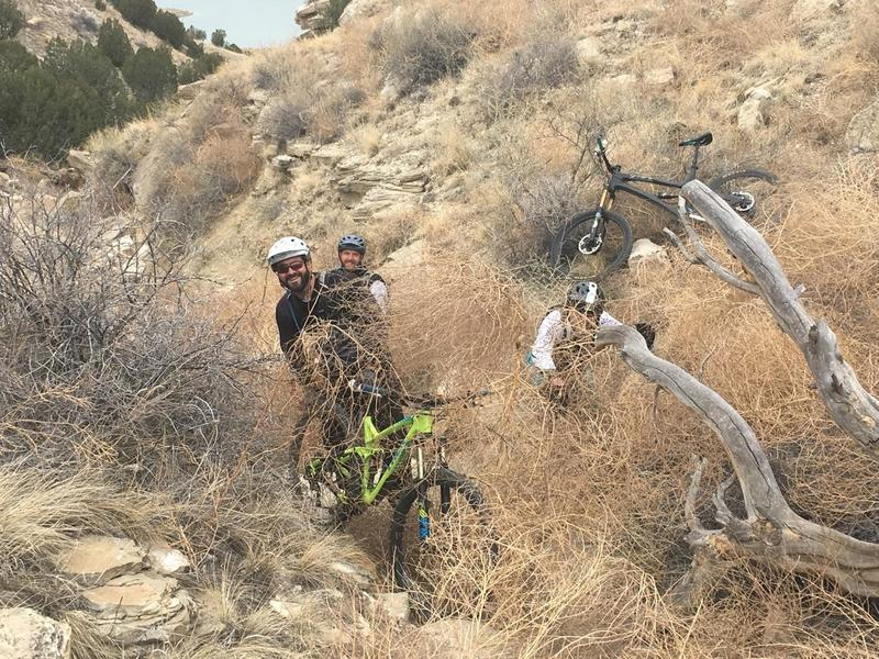 When tumbleweeds attack! Stomp them down real good before you throw them off the trail