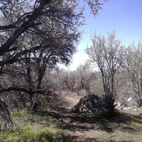 Bonneville Shoreline Trail above Kaysville/Fruit Heights area facing south.