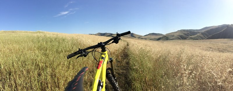 Nice singletrack of the spur connector to Bane Canyon Road..fun!