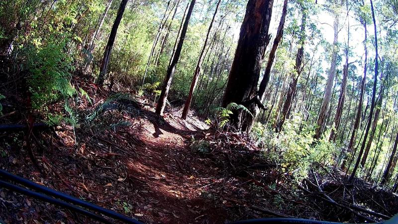 One of the many trails at Pemberton Mountain Bike Park.