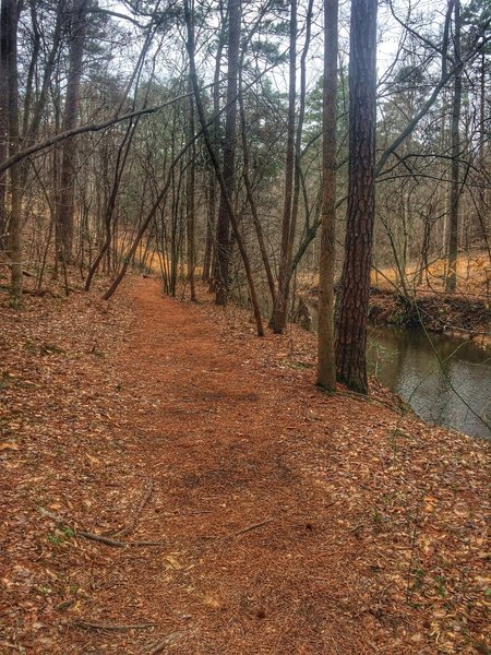 The trail passes along the creek here.