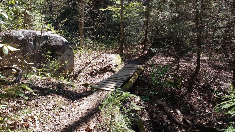 One of a few primitive bridges found on the Green River Cove Trail.