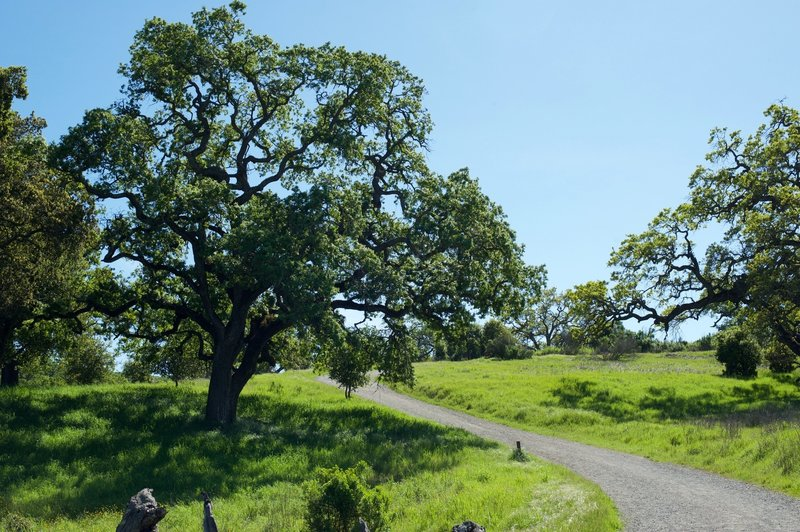 The trail winds up the hill after passing the Arastradero Lake.