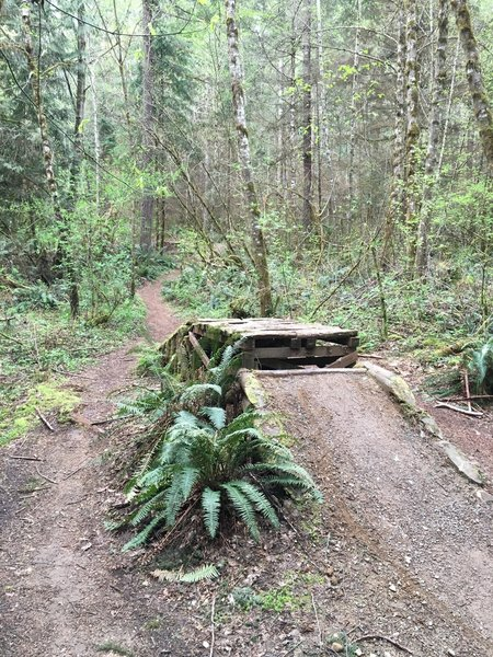 There is a sweet jump at the end of the Cedar Run Trail! It's one-way only for a reason!