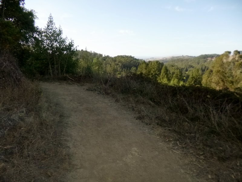 Looking north from Redwood Trail over Wildcat Canyon.