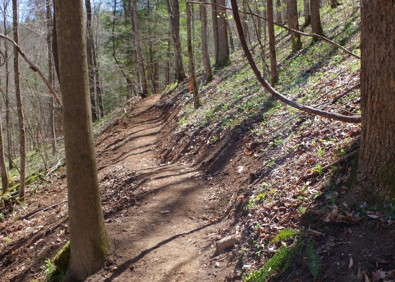 Newly constructed bike-optimized trail.