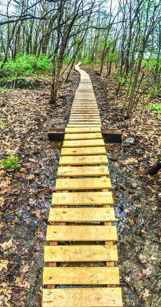 A 160-foot long ladder bridge meanders through the woods.