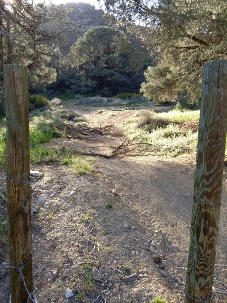 The beginning of the Frazier View Trail.