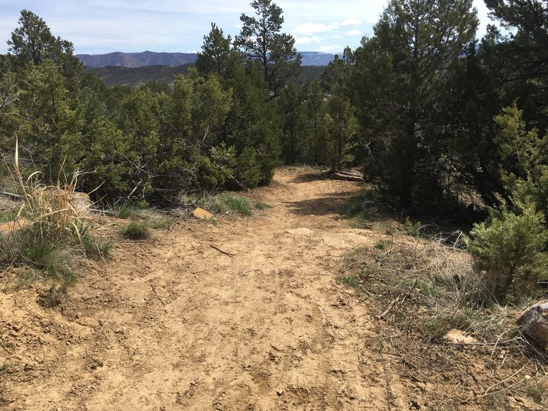 Pinyon Traill is nice singletrack for families and beginners.
