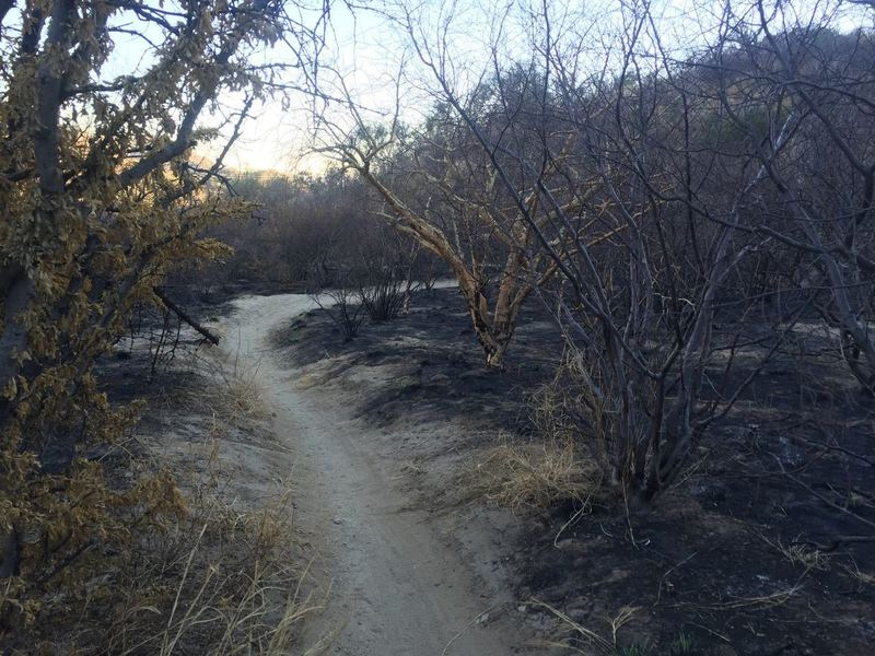 Caracoles downhill after a fire.
