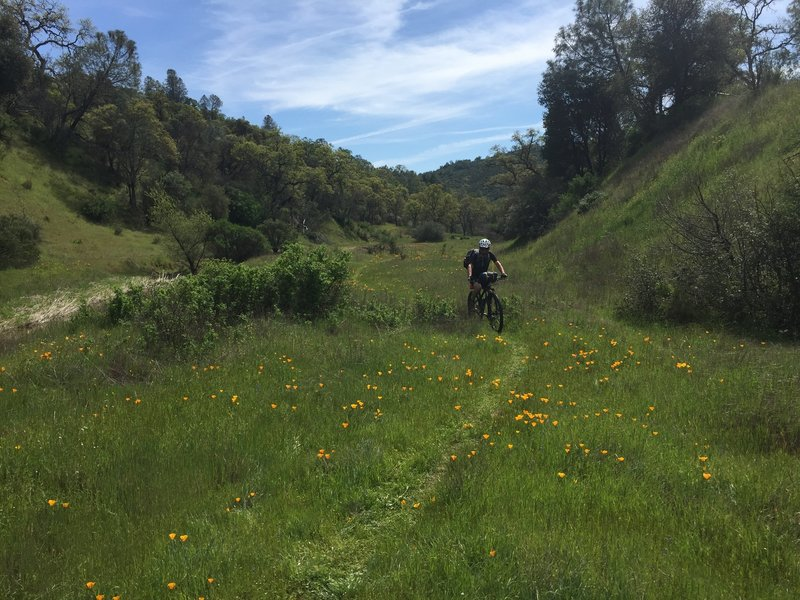Riding up Pacheco Creek Trail.