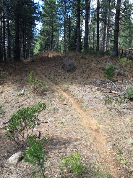 One of the two short, steep sections of the Stump Trail.