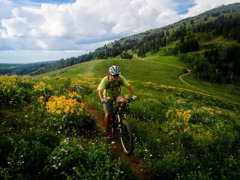 Rider Chris Davis pedals up Andy's trail towards Buffalo Soldier at Grand Targhee Resort in Alta, WY. <br> Photo: Dana Ramos - Instagram: @dnasince1979