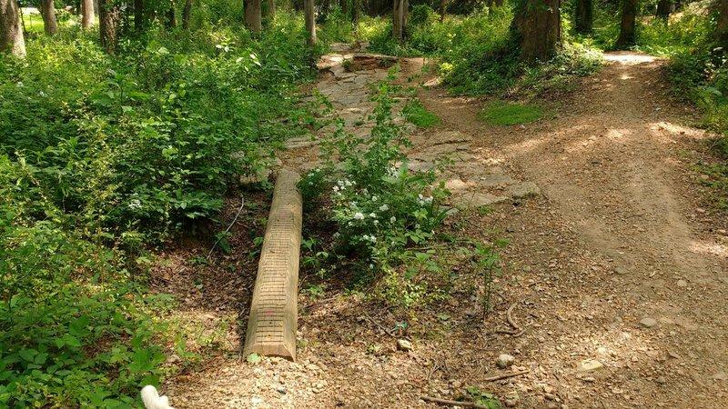 Log skinny into rock garden.