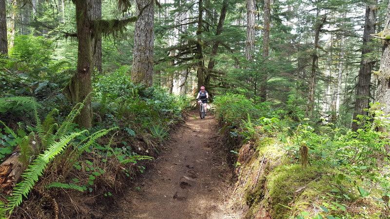 Cool little path next to a fallen tree.