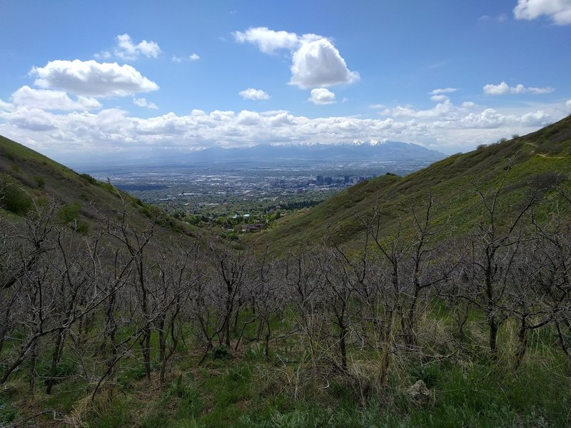 View of Salt Lake City from Bobsled...good stop for a break