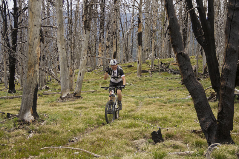 Riding through burned forest along the CDT.