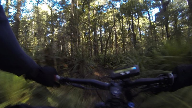 The southern end of North Track is all magnificent singletrack through beautiful forest.